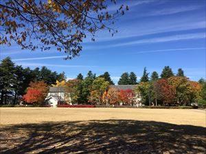 Autumn_leaves3