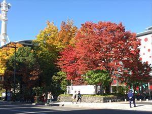 Autumn_leaves5